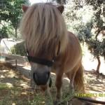 Pony Muñeco